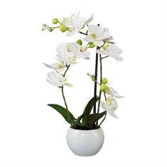 Orchidee weiß mit Topf, 42cm, Kunstpflanze